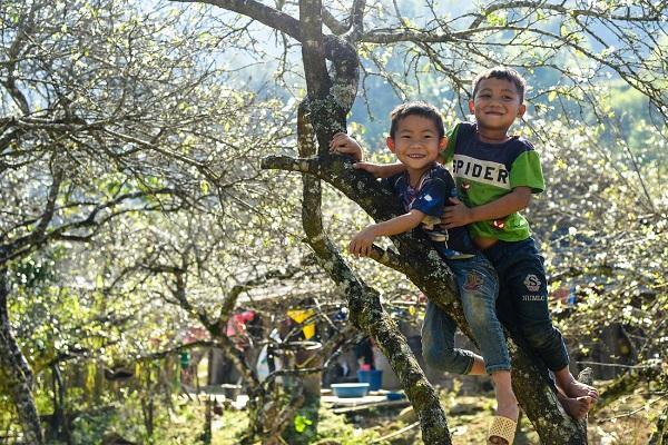 Nụ cười hồn nhiên của hai cậu bé dưới gốc mận.