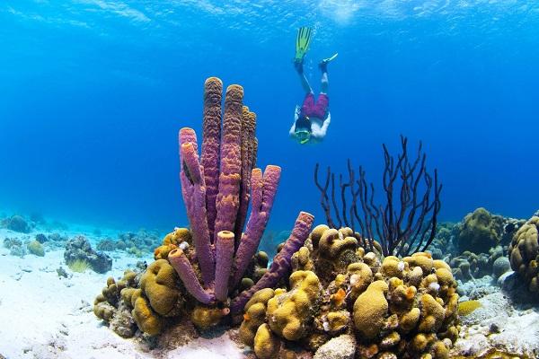 Lặn biển ngắm cá và san hô ở Curacao