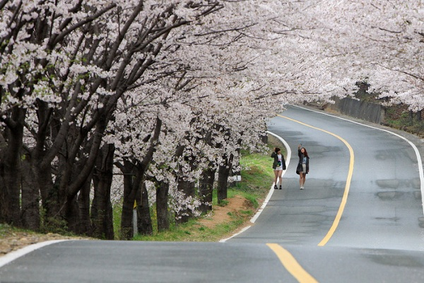 Mùa hoa anh đào là thời điểm du lịch lý tưởng cho những du khách yêu thích sự lãng mạn