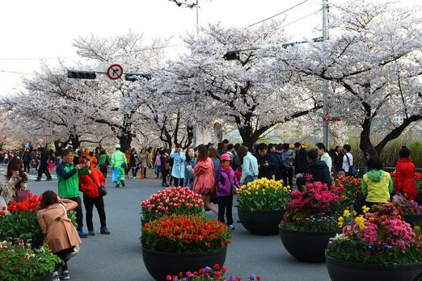 Lễ hội hoa tulip Everland diễn ra từ 26-3 đến 23-4 thu hút rất nhiều du khách tham quan